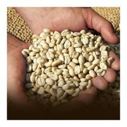 قهوه سبز پندار